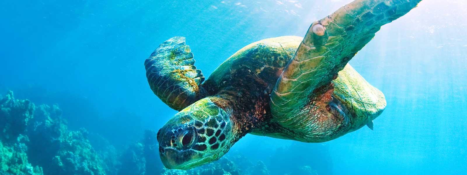 Resultado de imagem para turtles