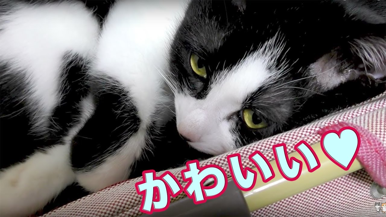 kittykendall